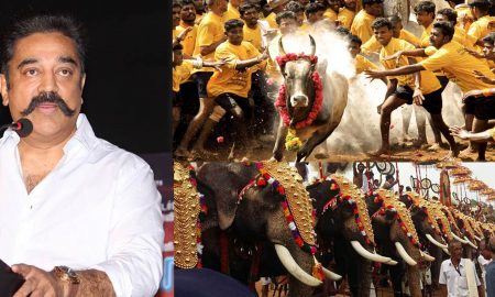 kamal hassan about jallikattu, kamal hassan latest news, jallikattu issue, tamilnadu issue rightnow, jallikattu situation now